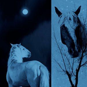 Ciliang,-Ren---China-(dayangclub66@163.com)---Fine-Horse10