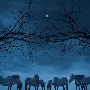 Ciliang,-Ren---China-(dayangclub66@163.com)---Fine-Horse5