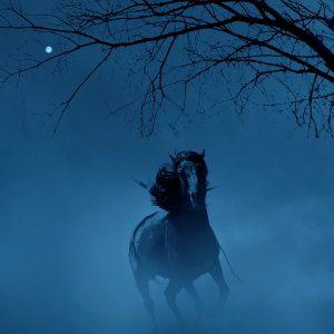 Ciliang,-Ren---China-(dayangclub66@163.com)---Fine-Horse6