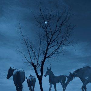 Ciliang,-Ren---China-(dayangclub66@163.com)---Fine-Horse7