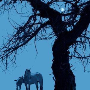 Ciliang,-Ren---China-(dayangclub66@163.com)---Fine-Horse8