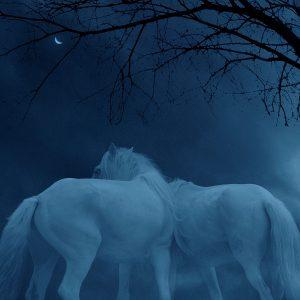 Ciliang,-Ren---China-(dayangclub66@163.com)---Fine-Horse9