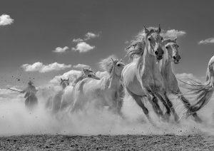 Dongqing,-Shi---China-(dayangclub49@163.com)---Running-Horses