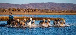 Guanglin,-Ren---China-(dayangclub47@163.com)---Horses