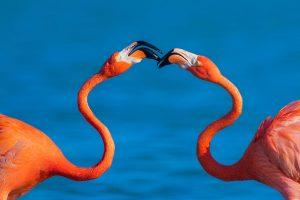 Jing,-Li---China-(dayangclub8@163.com)---Flamingo-12