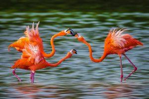 Jing,-Li---China-(dayangclub8@163.com)---Flamingo-8