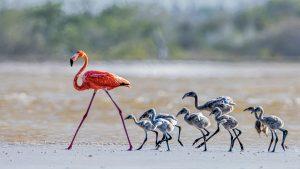 Jing,-Li---China-(dayangclub8@163.com)---Flamingos-18