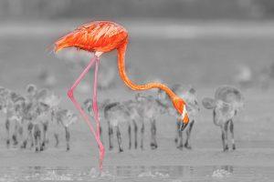 Jing,-Li---China-(dayangclub8@163.com)---Flamingos-23
