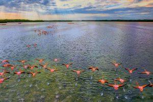 Jing,-Li---China-(dayangclub8@163.com)---Homeland-Of-Flamingos-1