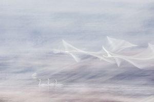 Jinzi,-Song---China-(51574221@QQ.COM)---Dream-Angels9