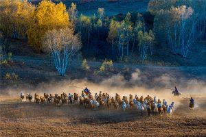 Jiuli,-Ji---China-(51574221@QQ.COM)---Grassland-Scene10