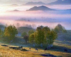 Jiuli,-Ji---China-(51574221@QQ.COM)---Grassland-Scene8
