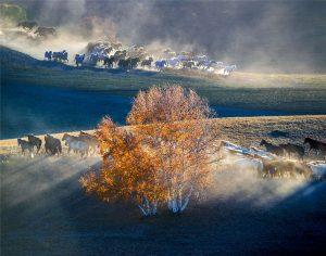 Jiuli,-Ji---China-(51574221@QQ.COM)---Grassland-Scene9