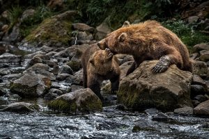 Liquan,-Sheng---China-(dayangclub67@163.com)---Brown-Bear-1