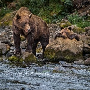 Liquan,-Sheng---China-(dayangclub67@163.com)---Brown-Bear-3
