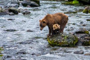 Liquan,-Sheng---China-(dayangclub67@163.com)---Brown-Bear-6