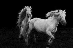 Xiangli,-Zhang---China-(dayangclub58@163.com)---Horses10