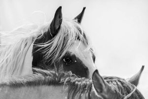 Xiangli,-Zhang---China-(dayangclub58@163.com)---Horses2