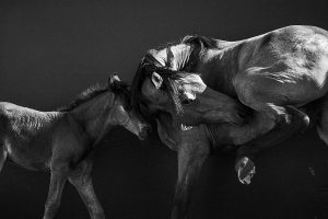 Xiangli,-Zhang---China-(dayangclub58@163.com)---Horses3