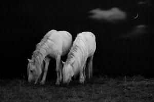 Xiangli,-Zhang---China-(dayangclub58@163.com)---Horses4