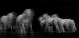 Xiangli,-Zhang---China-(dayangclub58@163.com)---Horses5