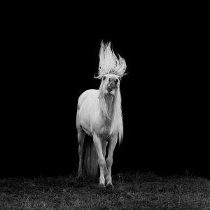 Xiangli,-Zhang---China-(dayangclub58@163.com)---Horses6
