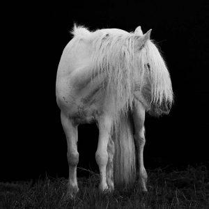 Xiangli,-Zhang---China-(dayangclub58@163.com)---Horses7