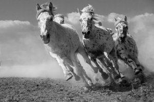 Xiangli,-Zhang---China-(dayangclub58@163.com)---Horses8