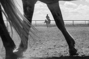Xiangli,-Zhang---China-(dayangclub58@163.com)---Horses9