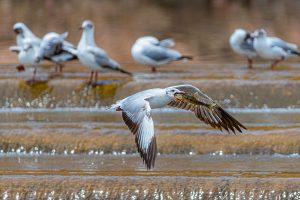 Yanping,-Qiu---China-(dayangclub78@163.com)---Sand-Gull-And-Yellow-Croaker8