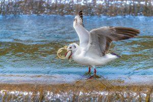 Yanping,-Qiu---China-(dayangclub78@163.com)---Sand-Gull-And-Yellow-Croaker9