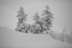Yi,-Gu---China-(dayangclub22@163.com)---The-Charm-Of-Winter6