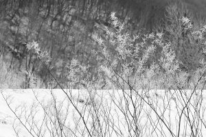 Yi,-Gu---China-(dayangclub22@163.com)---The-Charm-Of-Winter8