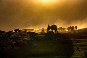 Yu,-Zhang---China-(dayangclub76@163.com)---Herds1