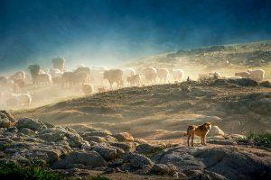 Yu,-Zhang---China-(dayangclub76@163.com)---Herds10