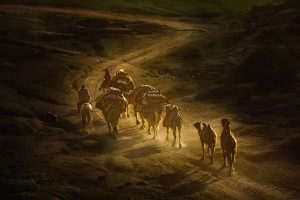 Yu,-Zhang---China-(dayangclub76@163.com)---Herds3