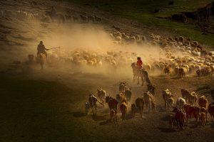 Yu,-Zhang---China-(dayangclub76@163.com)---Herds5