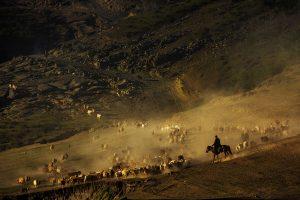 Yu,-Zhang---China-(dayangclub76@163.com)---Herds9